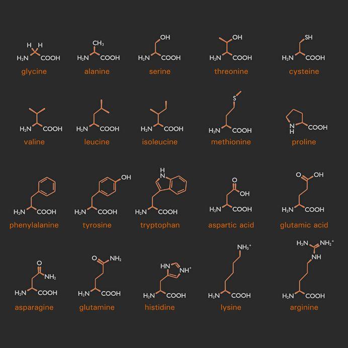 funciones-de-los-aminoácidos-1-640x333