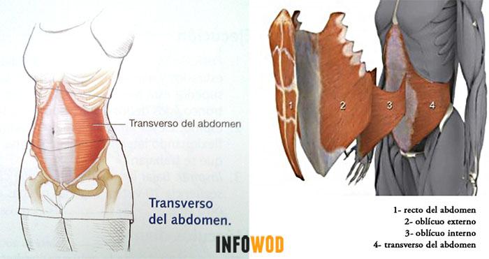 anatomia-abdomen-2