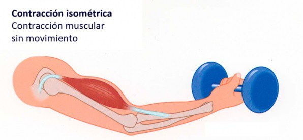 contracción muscular isometrica
