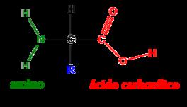 estructura del aminoacido